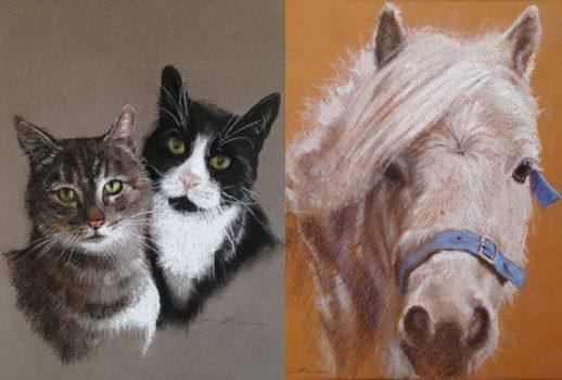image of sally lintons pet portraits perranuthnoe